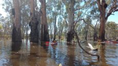 unley-horshoe-swamp